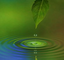 About Trauma Therapy & EMDR. Library Image: Leaf and Water